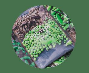 vegan protein sachets